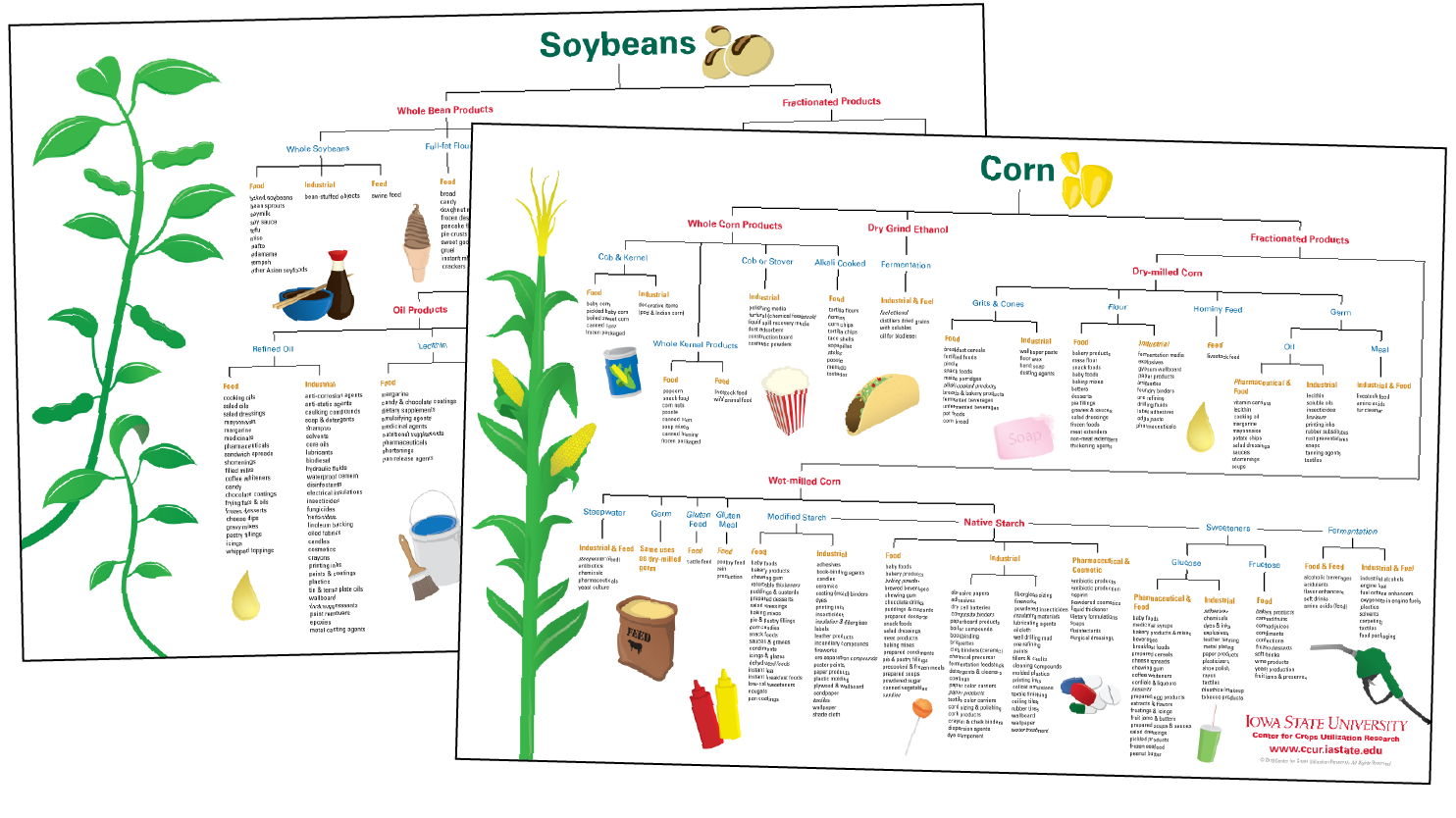 Corn and Soybean Uses Posters